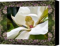 Flower Photos Canvas Prints - Mountain Magnolia Canvas Print by Bell And Todd