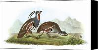 Quail Canvas Prints - Mountain Quail Canvas Print by John James Audubon