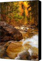Evergreens Canvas Prints - Mountain Stream in Autumn Canvas Print by Utah Images