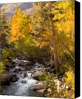 Mountain Stream Canvas Prints - Mountain Stream Canvas Print by Mark Wilburn
