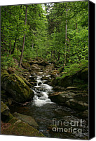 Forest Pyrography Canvas Prints - Mountain stream Canvas Print by Torsten Dietrich