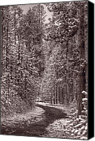 Montana Canvas Prints - Mountain Trail Yellowstone BW Canvas Print by Steve Gadomski