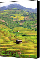 Vietnam Canvas Prints - Mountainous Rice Field Canvas Print by Akari Photography