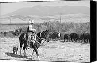 Blue Heeler Canvas Prints - Moving the Herd-2 Canvas Print by Francis Riley