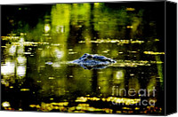 Gator Canvas Prints - Mr. Nice Guy Canvas Print by Scott Pellegrin