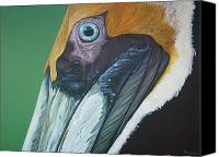 Jon Ferrentino Canvas Prints - Mr.Pelican Canvas Print by Jon Ferrentino