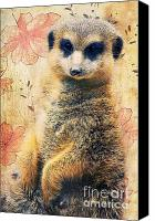Red Cross Mixed Media Canvas Prints - Mrs Suricate Canvas Print by Angela Doelling AD DESIGN Photo and PhotoArt