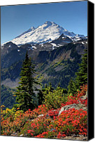 Volcano Canvas Prints - Mt. Baker Autumn Canvas Print by Winston Rockwell