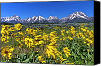 Grand Teton Canvas Prints - Mt. Moran In Grand Teton National Park Canvas Print by Rob Daugherty - RobsWildlife.com