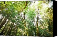 Northern California Photo Canvas Prints - Muir Woods Canvas Print by Ariane Moshayedi