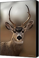 Mule Deer Canvas Prints - Mule Deer Buck Canvas Print by Karen Slagle