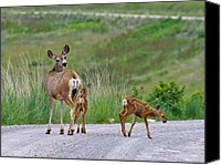 Mule Deer Canvas Prints - Mule Deer Doe and Twin Fawns Canvas Print by Karon Melillo DeVega