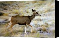 Marty Koch Canvas Prints - Mule Deer On The Move Canvas Print by Marty Koch