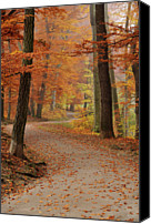 Road Canvas Prints - Munich Foliage Canvas Print by Frenzypic By Chris Hoefer