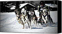 Animal Photo Canvas Prints - Mushing Canvas Print by Daniel Wildi Photography