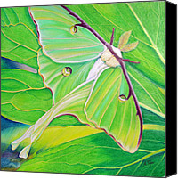 Insects Pastels Canvas Prints - Must Be Dreaming Canvas Print by Amy Tyler