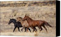 Wild Horses Canvas Prints - Mustang Trio Canvas Print by Mike  Dawson