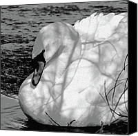 Black And White Digital Art Digital Art Canvas Prints - Mute Swan Canvas Print by Betty LaRue