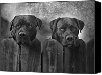 Pitbull Canvas Prints - Mutt and Jeff Canvas Print by Larry Marshall