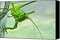 Macro Photography Canvas Prints - My best friend Canvas Print by Kristin Kreet