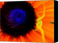 Flowers   Spider Canvas Prints - My Domain Canvas Print by Kathy Sampson