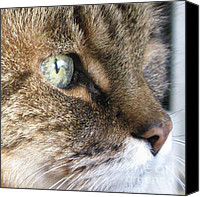 Motivation For Children Canvas Prints - My green eyed beauty Canvas Print by Ausra Paulauskaite
