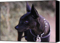 Pinscher Canvas Prints - My Shadow  Canvas Print by Saija  Lehtonen
