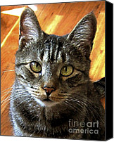 Stripped Cat Canvas Prints - My Sweet Cross-eyed Zachary Canvas Print by Dale   Ford