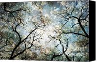 Starry Canvas Prints - Mystic Forest Sky Canvas Print by Andrea Hazel Ihlefeld