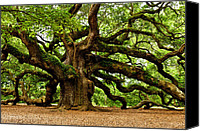 Photographs Photo Canvas Prints - Mystical Angel Oak Tree Canvas Print by Louis Dallara