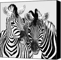 Animal Photo Canvas Prints - Namibia Zebras IV Canvas Print by Nina Papiorek