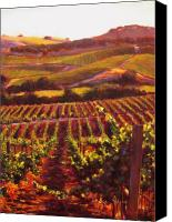 Contry Canvas Prints - Napa Carneros Summer Evening Light Canvas Print by Takayuki Harada