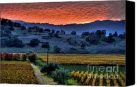 Country Photographs Canvas Prints - napa Valley Sunset 20 Canvas Print by Mars Lasar