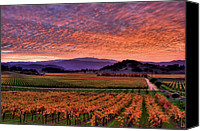 Northern California Canvas Prints - Napa Valley Sunset Canvas Print by Mars Lasar