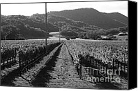 Country Photographs Canvas Prints - Napa Valley Vineyard .  Black and White . 7D9020 Canvas Print by Wingsdomain Art and Photography
