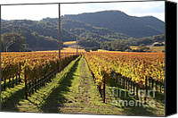 Vine Canvas Prints - Napa Valley Vineyard . 7D9020 Canvas Print by Wingsdomain Art and Photography