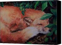 Fox Pastels Canvas Prints - Napping Fox Canvas Print by Donna Teleis