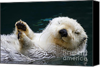 Otter Photo Canvas Prints - Napping on the Water Canvas Print by Mike  Dawson