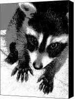 Raccoon Digital Art Canvas Prints - Natalys Canvas Print by Ember Findlay