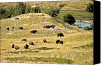 Meadows Canvas Prints - National Bison Range Moiese MT Canvas Print by Christine Till