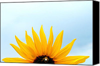 Bathrooms Canvas Prints - Natural Sunrise - Sunflower and Bee Canvas Print by Steven Milner