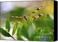 Atlantic Canvas Prints - Nature and Wildlife Series Canvas Print by Terry Troupe