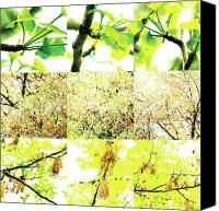 Photo Grids Canvas Prints - Nature Scape 003 Canvas Print by Robert Glover