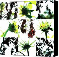 Photo Grids Canvas Prints - Nature Scape 008 Canvas Print by Robert Glover