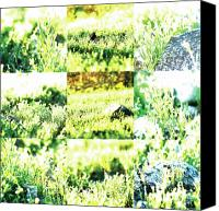 Photo Grids Canvas Prints - Nature Scape 009 Canvas Print by Robert Glover