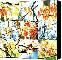 Photo Grids Canvas Prints - Nature Scape 014 Canvas Print by Robert Glover