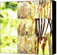 Photo Grids Canvas Prints - Nature Scape 016 Canvas Print by Robert Glover