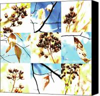Photo Grids Canvas Prints - Nature Scape 021 Canvas Print by Robert Glover