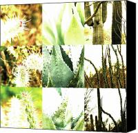 Photo Grids Canvas Prints - Nature Scape 022 Canvas Print by Robert Glover