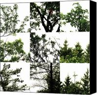 Photo Grids Canvas Prints - Nature Scape 026 Canvas Print by Robert Glover